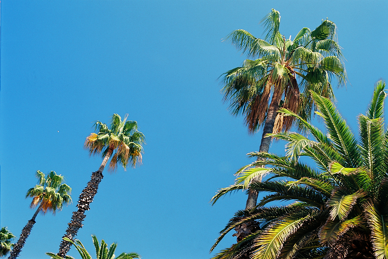 Kodak Ektar 100 Professional Palms