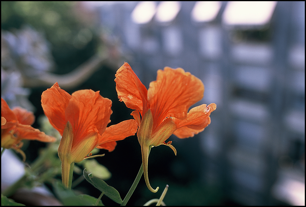 Fujichrome Provia 100F Flower