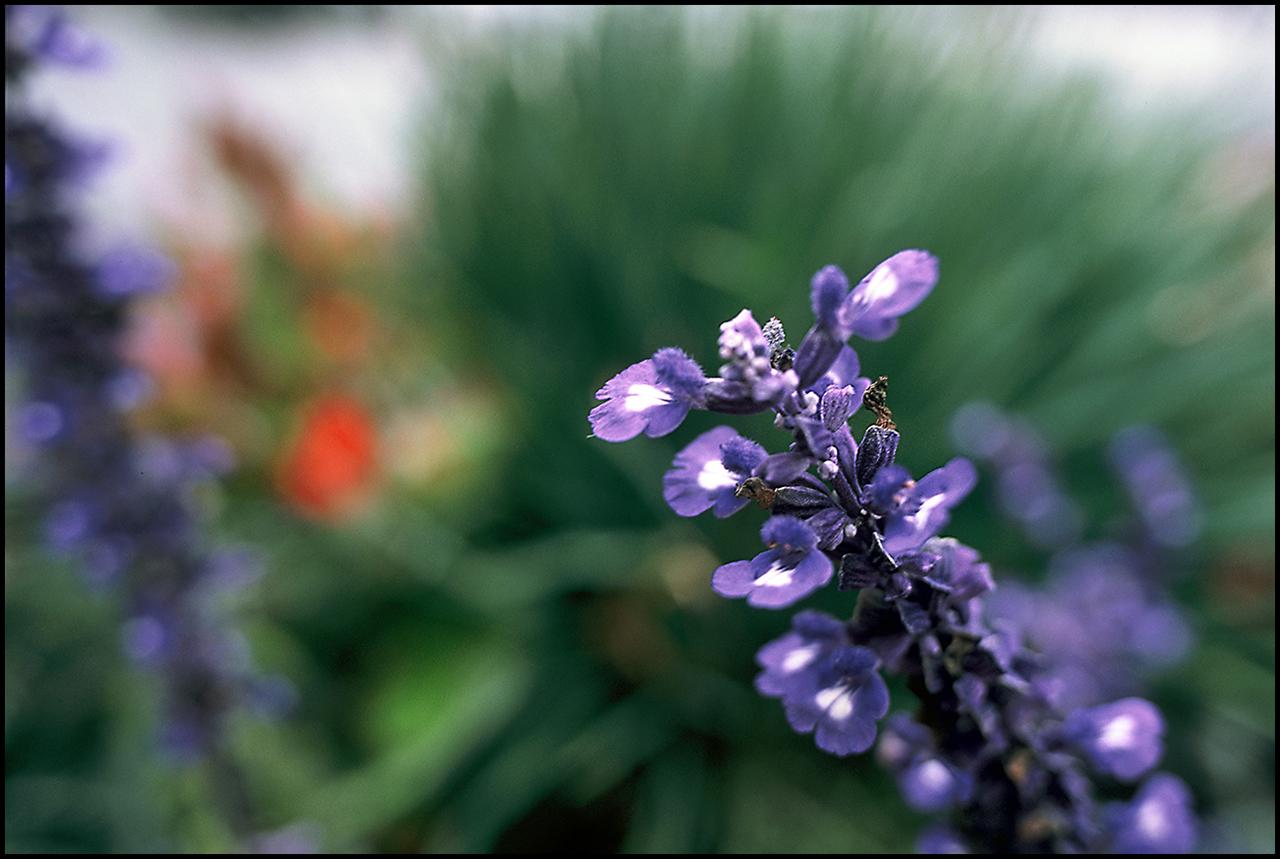 Fujichrome Provia 100F Purple
