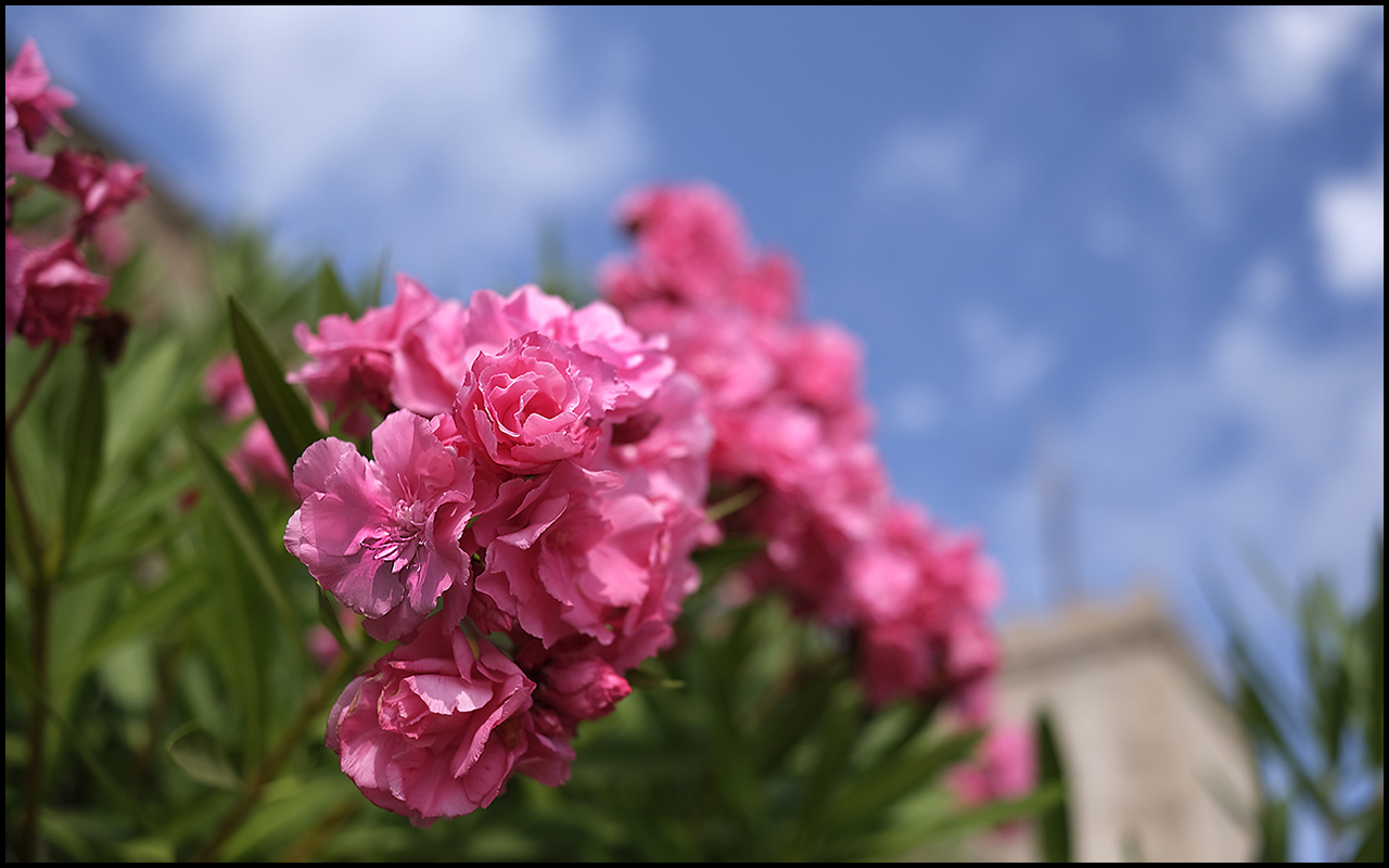 Fujinon XF 18mm ƒ/1.4 R LM WR Pink
