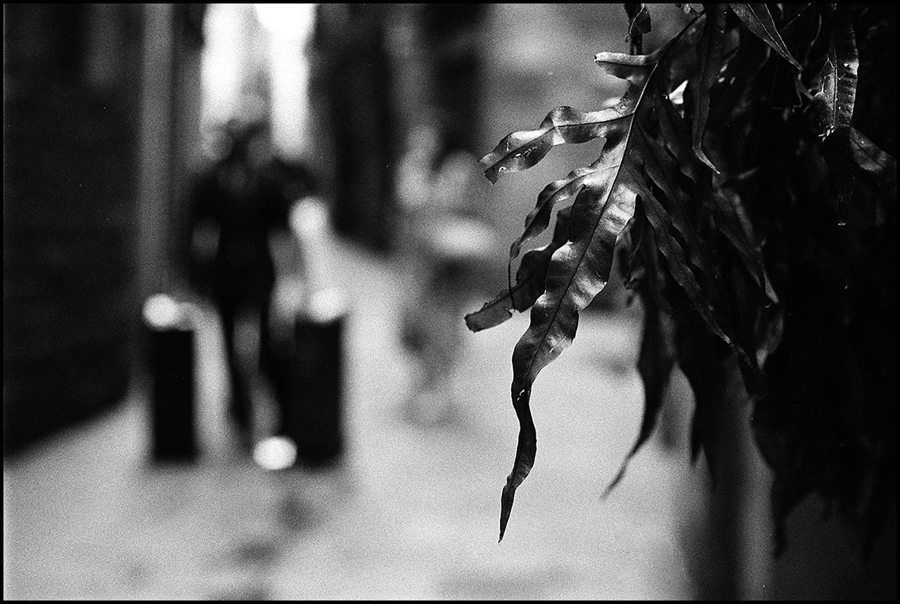 Nikon F3 Leaf